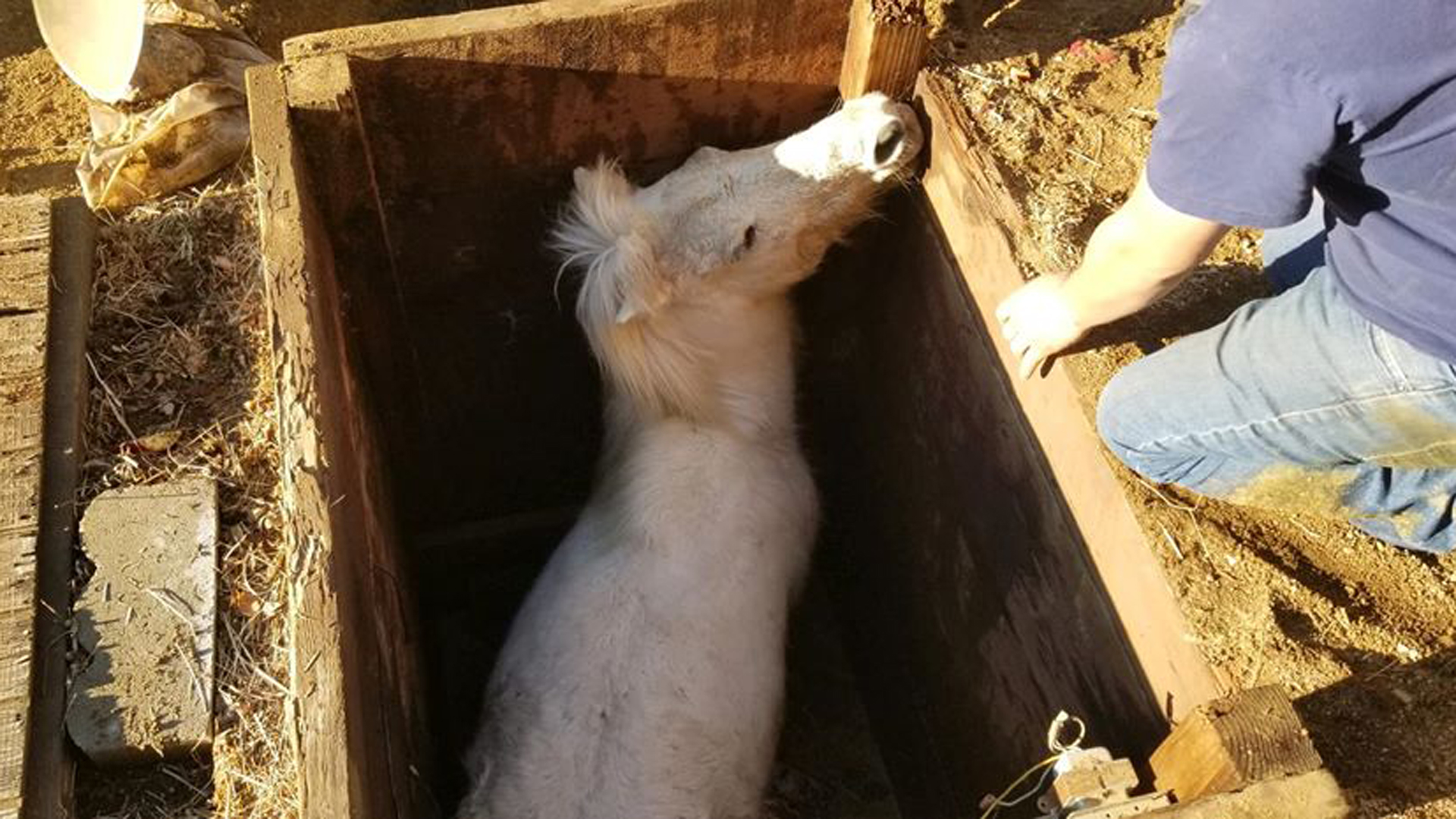 Firefighters rescued a horse trapped in a pit near Barstow on Dec. 27, 2019. (Credit: San Bernardino County Fire Department)