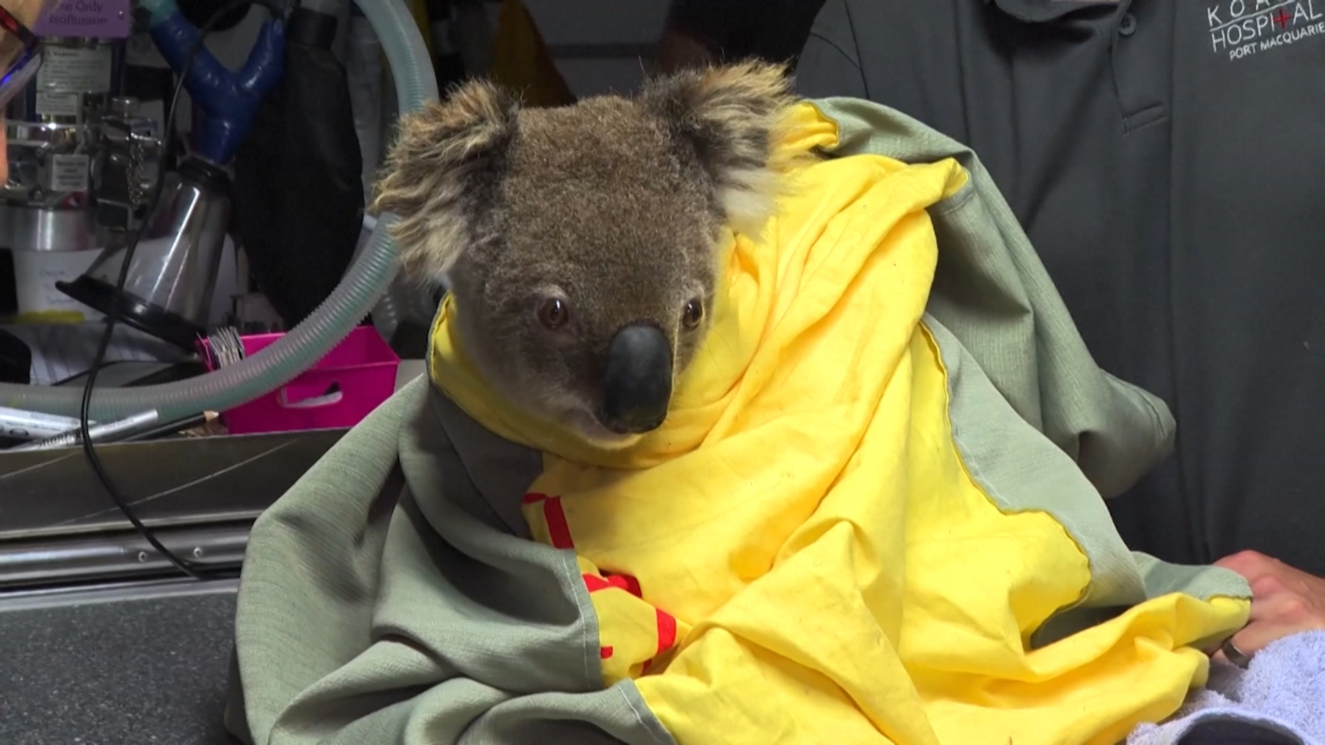 A koala receives medical care in this photo obtained by CNN from CCTV Australia in December 2019.