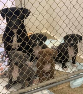 The McIntosh County Animal Services released this photo of the mother dog and her puppies on Jan. 23, 2020.