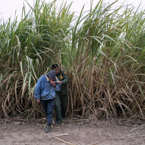 A U.S. Border Patrol agent detains an undocumented immigrant caught in a sugar cane field on Dec. 11, 2019, near Mission, Texas. (Credit: John Moore / Getty Images)