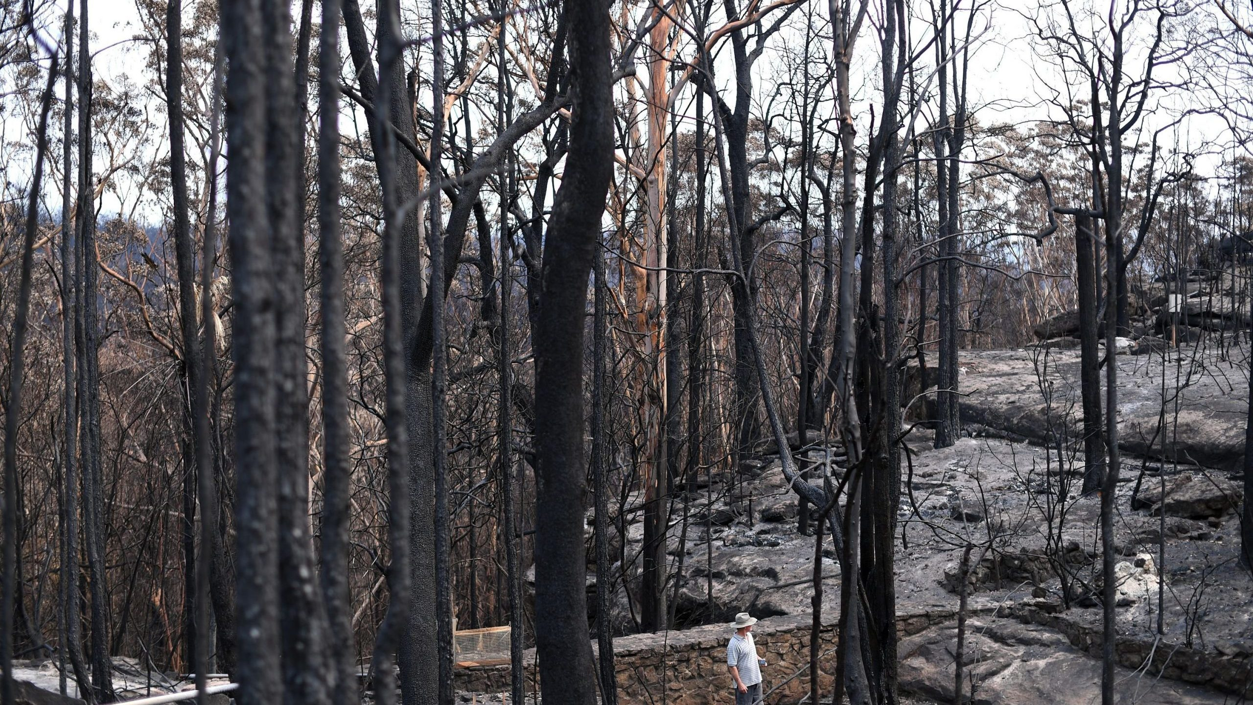This photo taken on Jan. 15, 2020, shows a resident looking at burnt trees following a bushfire in the Budgong area of New South Wales, Australia. (Credit: Saeed Khan / AFP / Getty Images)