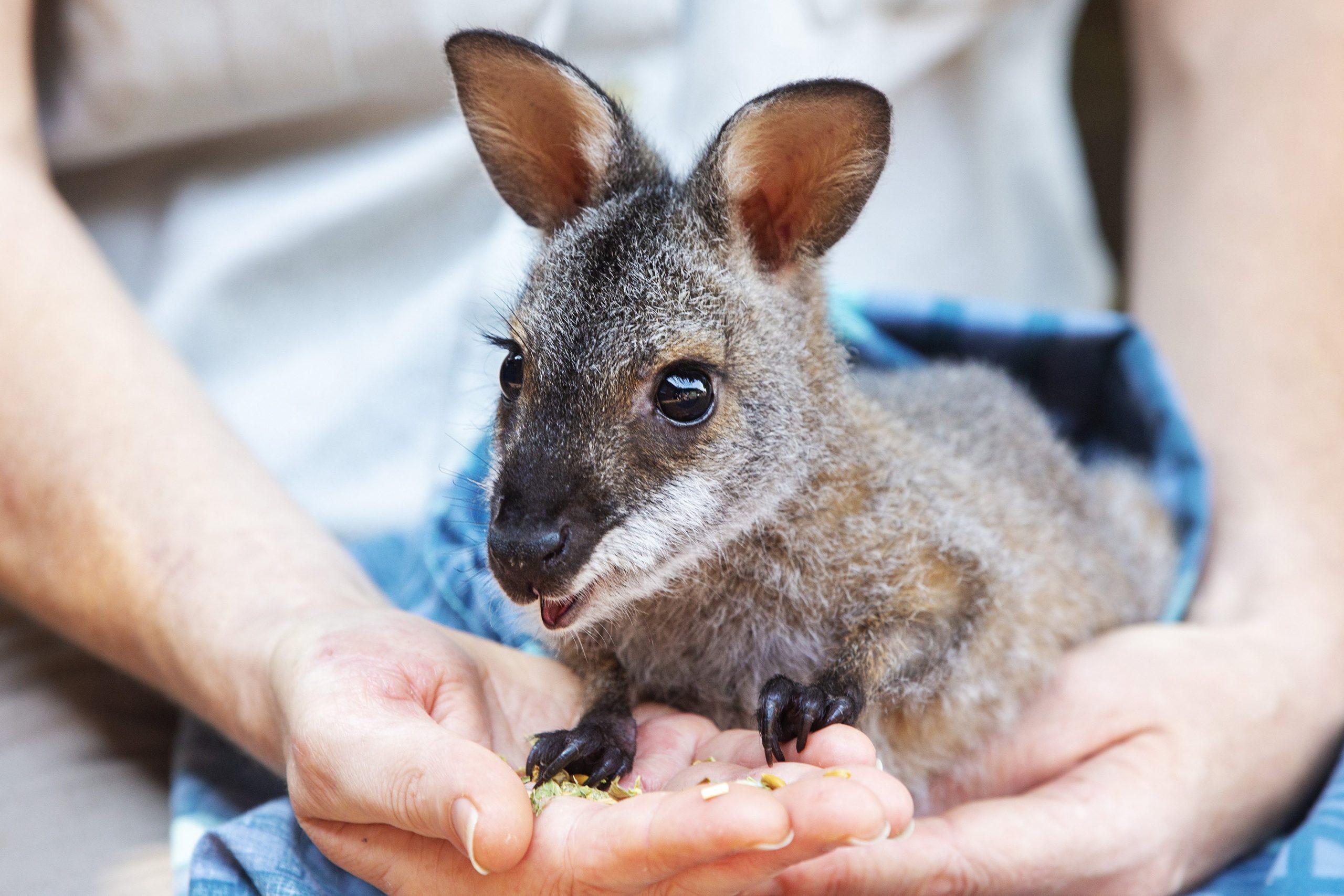Scientists Search For Survivors Of Rare Species Amid Australia S Wildfires Ktla