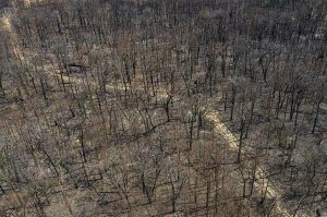 An aerial view shows fire-ravaged bushland on Jan. 15, 2020 in Torrington, Australia. (Credit: Brook Mitchell / Getty Images)