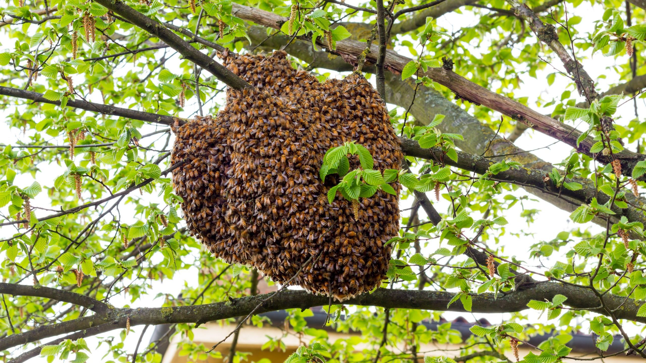 Bees are seen swarming a hive in this file image. (Credit: iStock / Getty Images Plus)