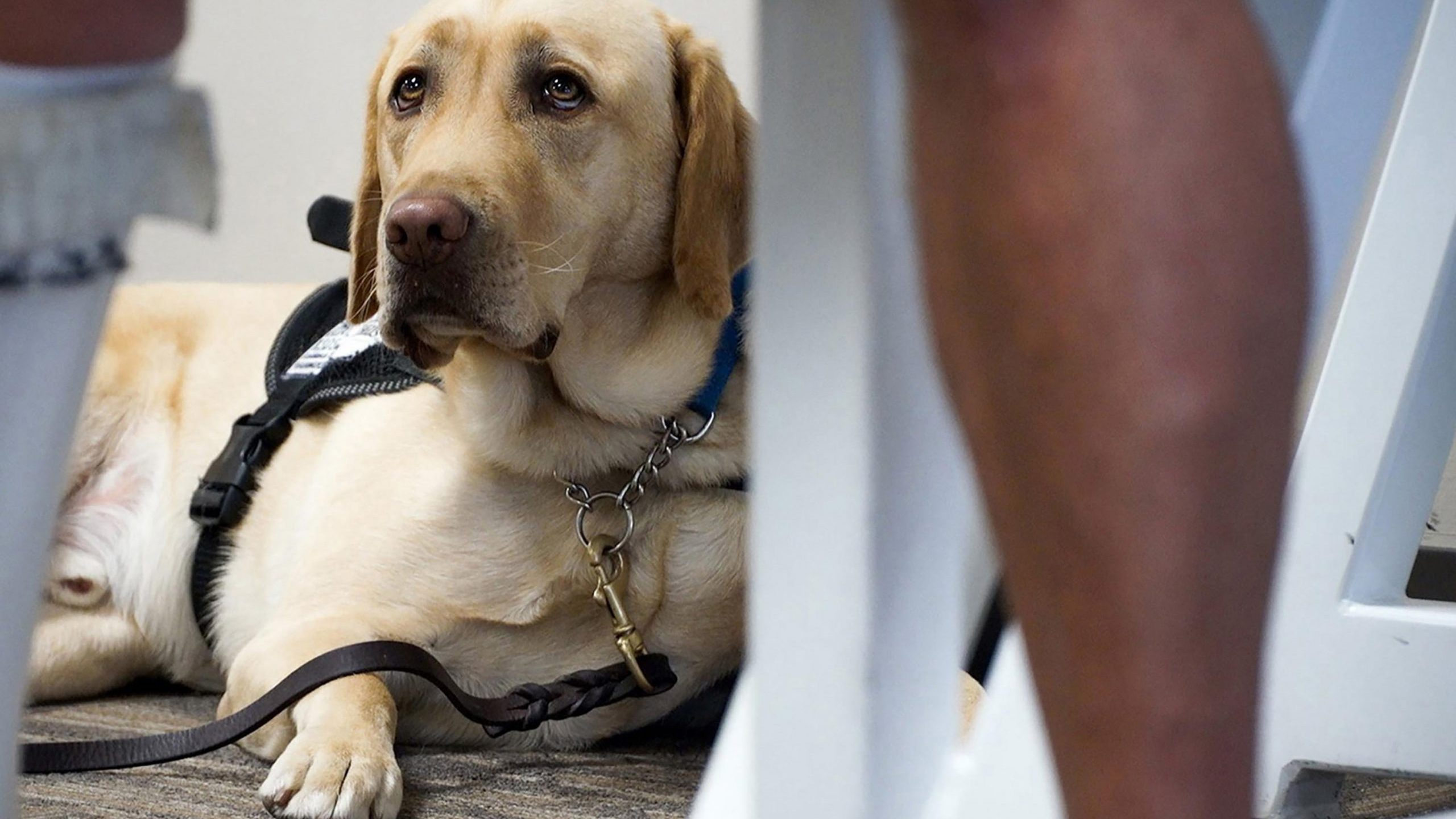 The concept of pets on planes has become a hot-button issue of late as emotional support animals have become more prominent than ever. (Shelly Yang/Kansas City Star/Tribune News Service via Getty Images)