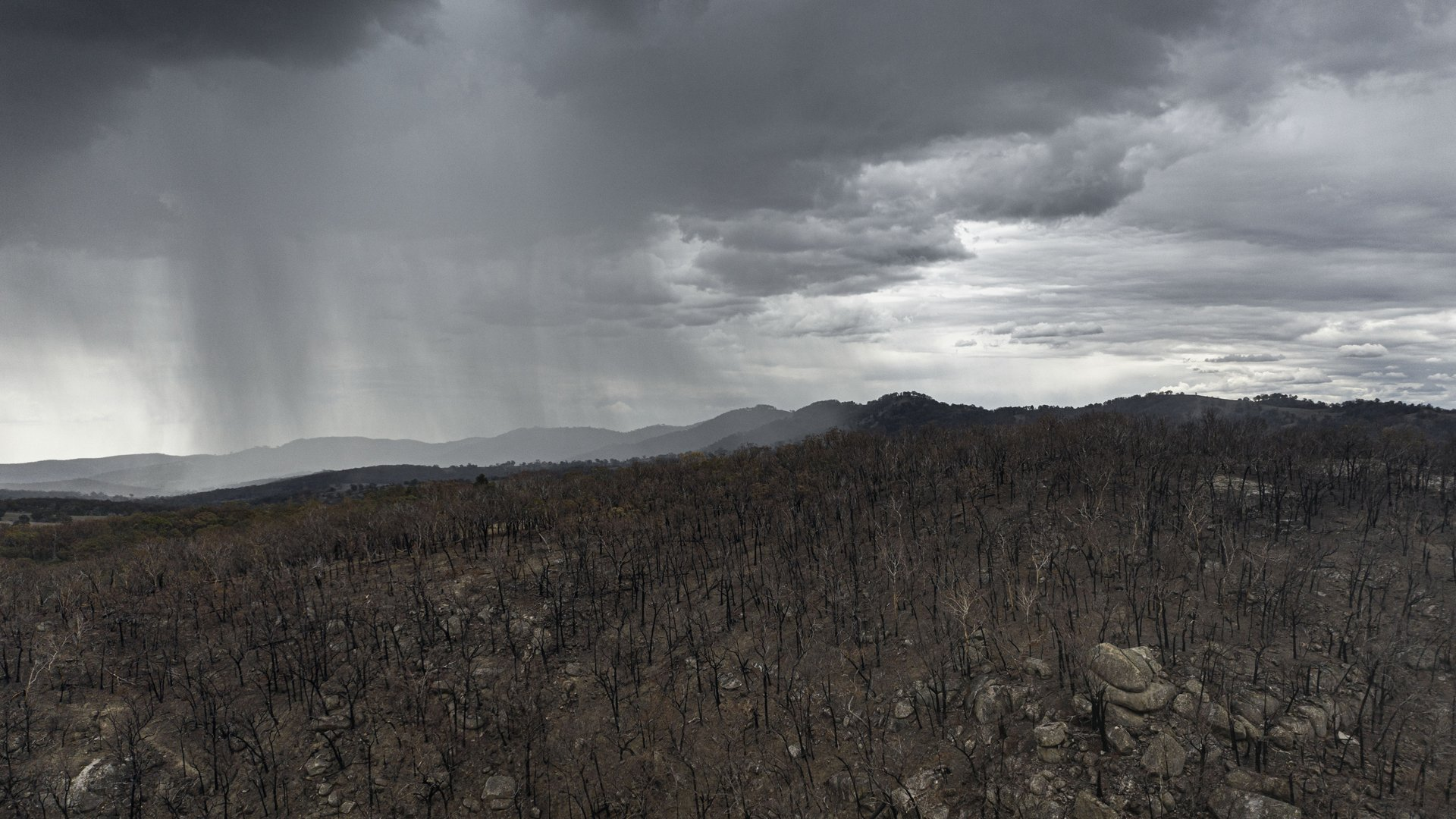 An aerial view as rain begins to fall on drought and fire-ravaged country near Tamworth ahead of predicted further wet weather across NSW and Victoria this week on Jan. 15, 2020, in Tamworth, Australia. (Credit: Brook Mitchell/Getty Images)
