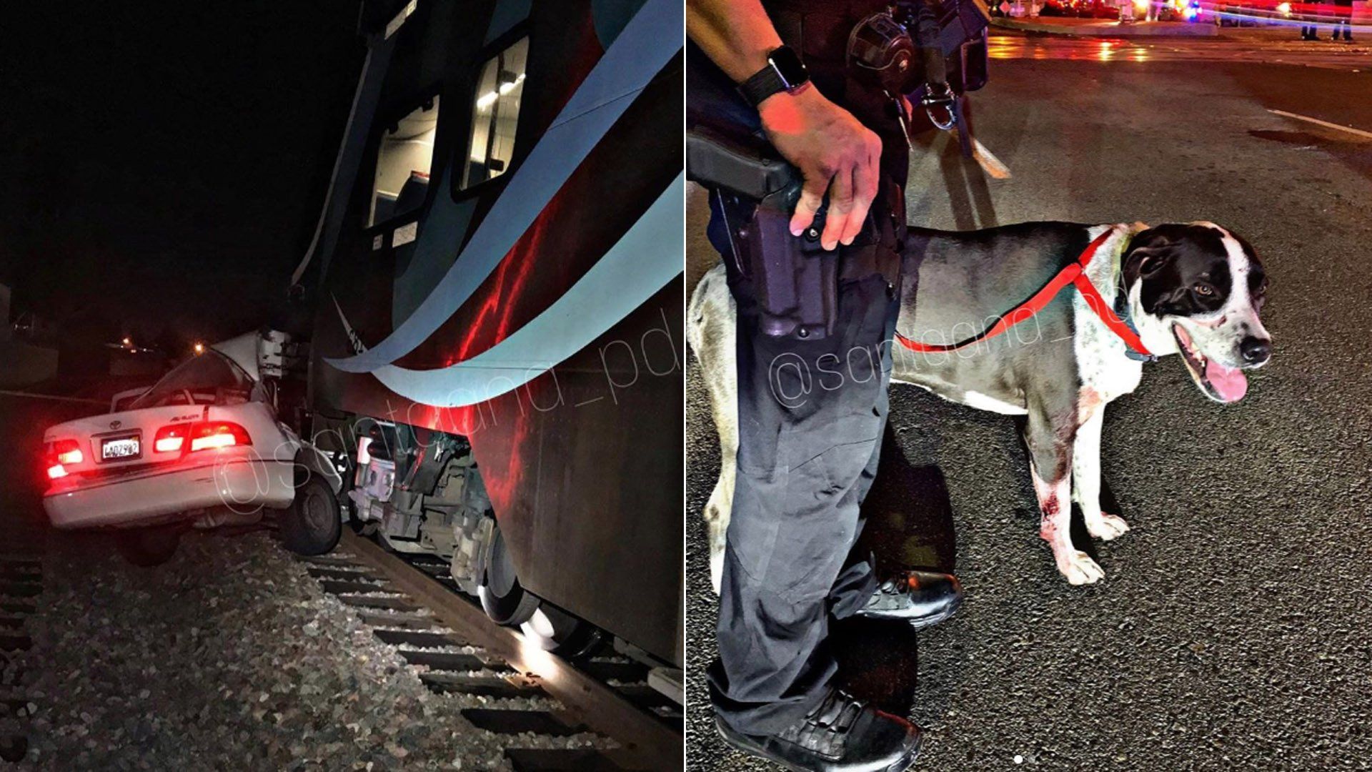 Santa Ana police released these photos of a sedan and a dog involved in a deadly train crash on Jan. 6, 2020.
