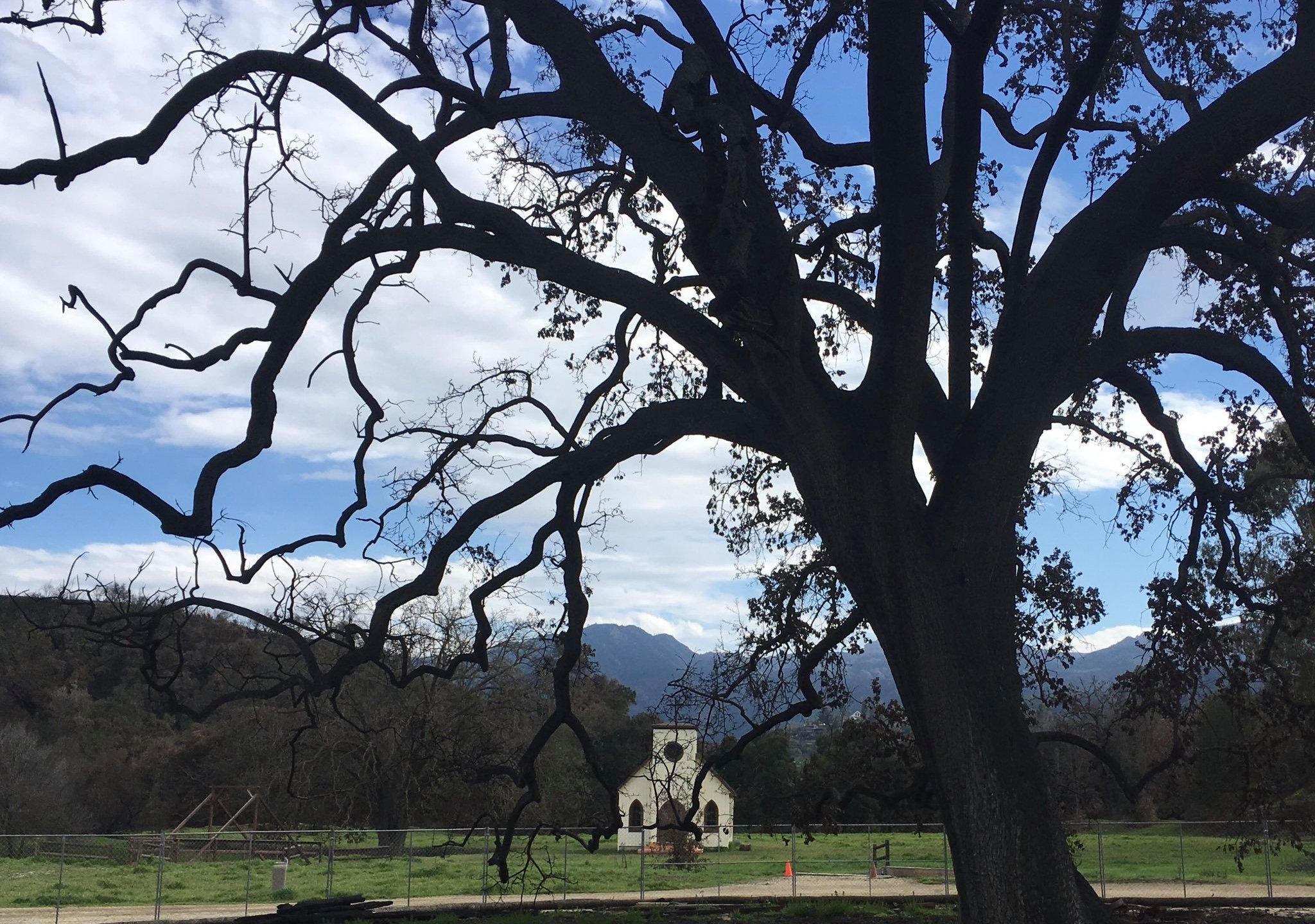 "The ""witness tree"" at Paramount Ranch is seen in a photo tweeted March 5, 2019, by the Santa Monica Mountains National Recreation Area."