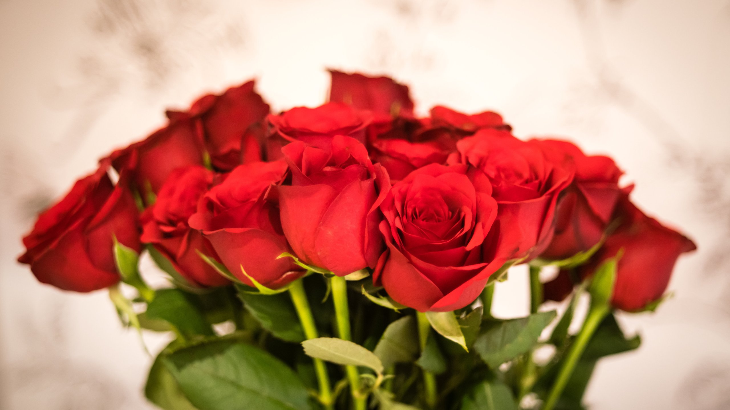 A classic bunch of red roses is seen in this file photo. (Credit: Getty Images)