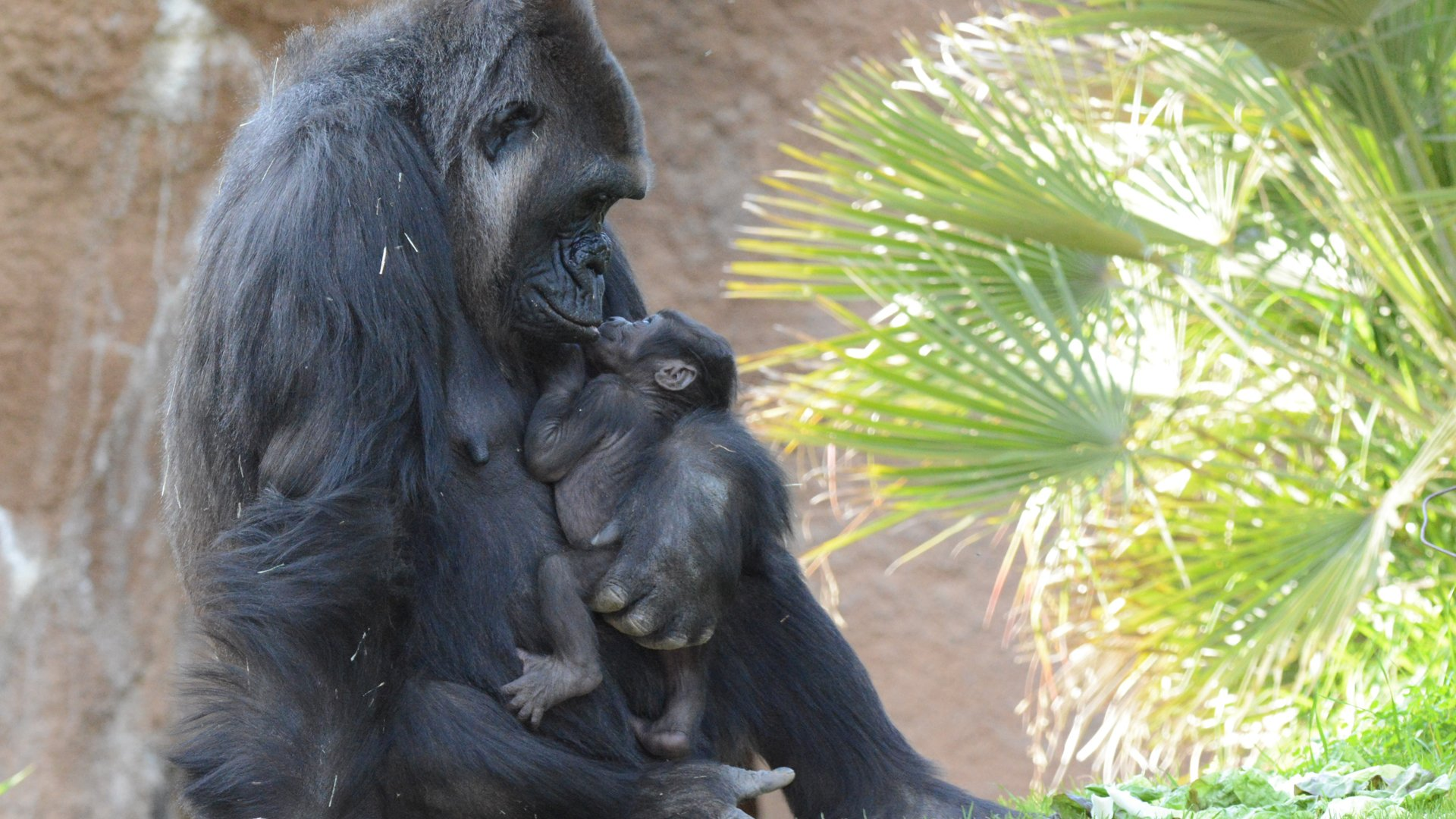 N'djia and Angela are seen in a photo released by the L.A. Zoo on Feb. 18, 2020.