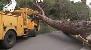 A tree fell down in Hollywood Hills on Feb. 3, 2020. (Credit: KTLA)