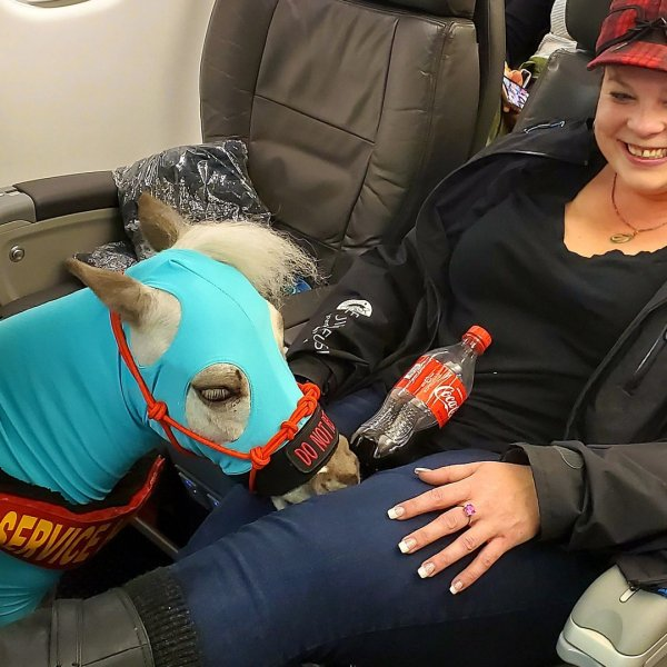Ronica Froese and her service miniature horse, Fred, flying first-class. (Credit: Ronica Froese via CNN)