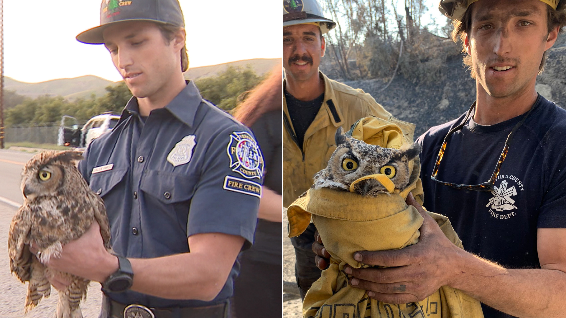 Firefighter Caleb Amico holds Ram, at left, just before his release back into Ventura County skies on Feb. 26, 2020, and at right, after finding the injured owl on Nov. 2, 2019. (Credit: KTLA / Ventura County Fire Department)