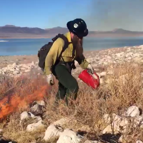 Fire crews burning non-native Bassia hyssopifolia to restore and protect nesting areas for birds on a tiny island at Mono Lake on Feb. 14, 2020. (Credit: Inyo National Forest)