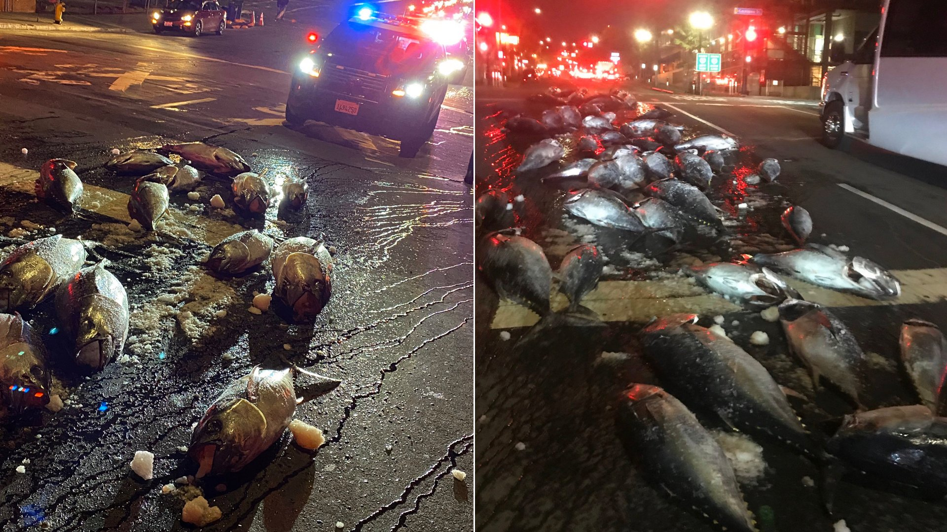A truck driver spilled dozens of frozen tuna in downtown San Diego on Feb. 4, 2020. (Credit: San Diego Police Department)
