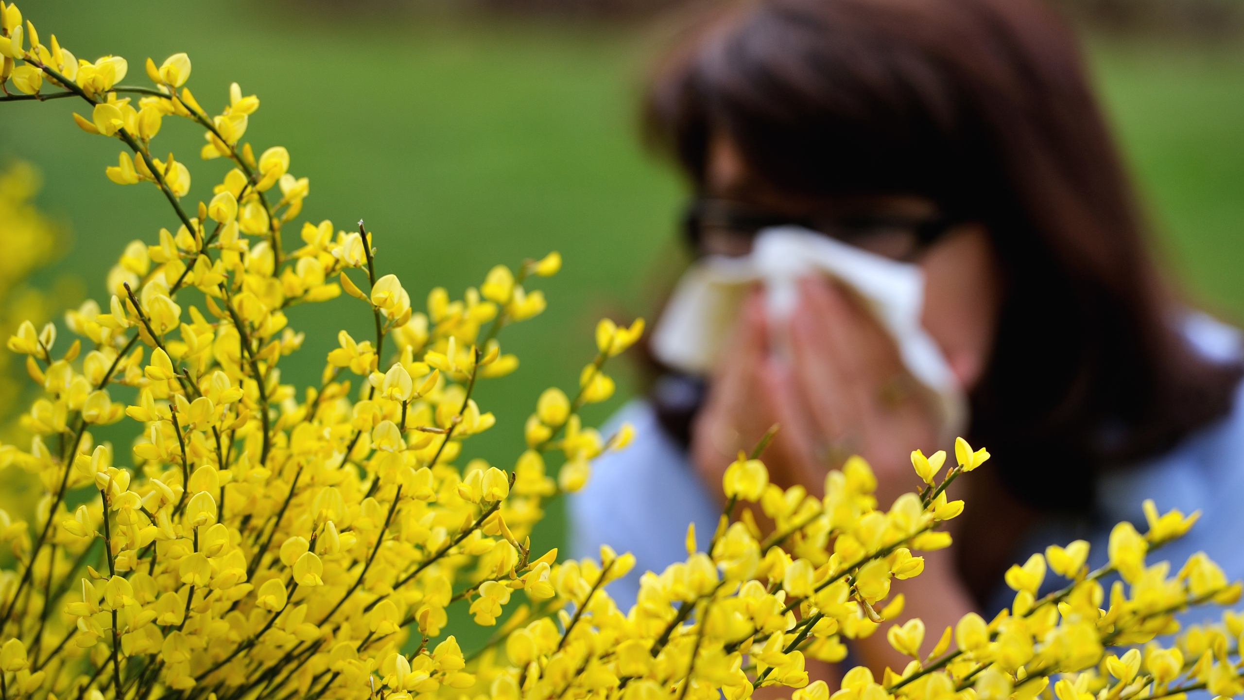 A woman blows her nose in Godewaersvelde, northern France on May 18, 2013, as the return of pleasant weather marks the arrival of pollen. (PHILIPPE HUGUEN/AFP via Getty Images)