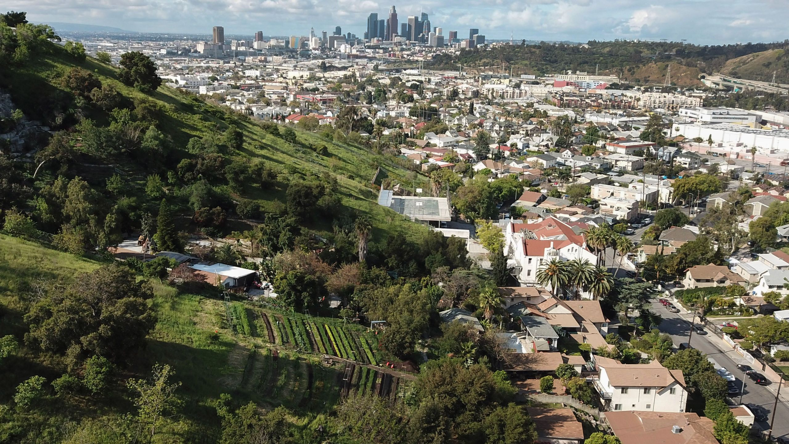 "An aerial view of the small urban farm ""Avenue 33 Farm"" with the Los Angeles skyline in the background on March 25, 2020. (ROBYN BECK/AFP via Getty Images)"