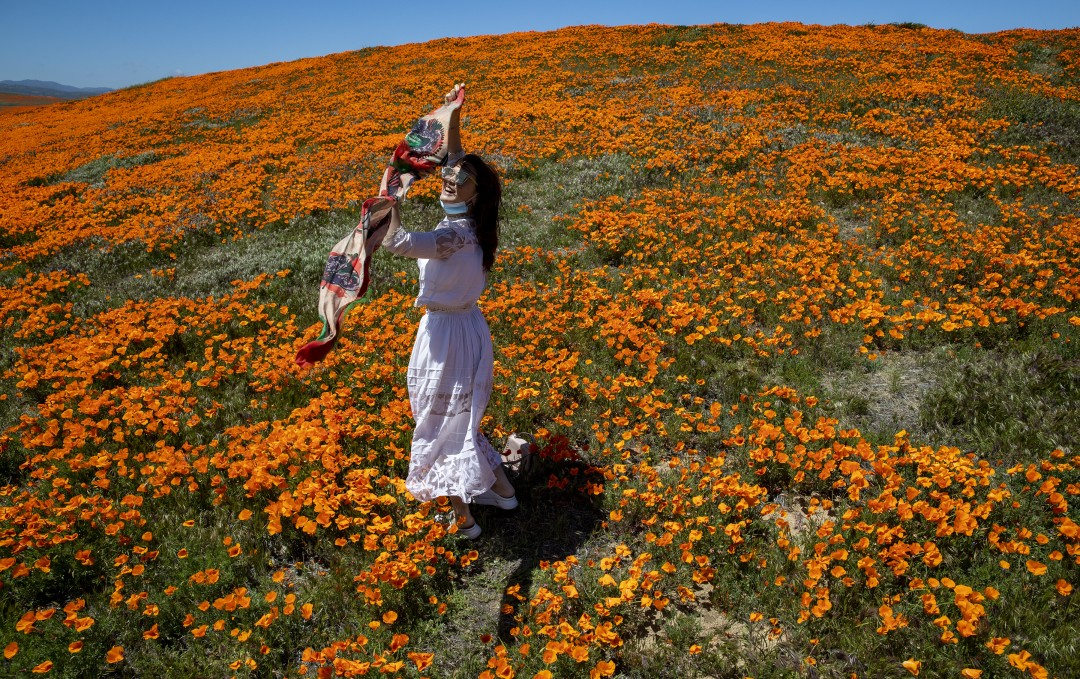 Vivi Zhao of Santa Monica dances among blooming California poppies in Lancaster outside of the perimeter of the California Poppy State Natural Reserve on April 21, 2020. (Brian van der Brug / Los Angeles Times)