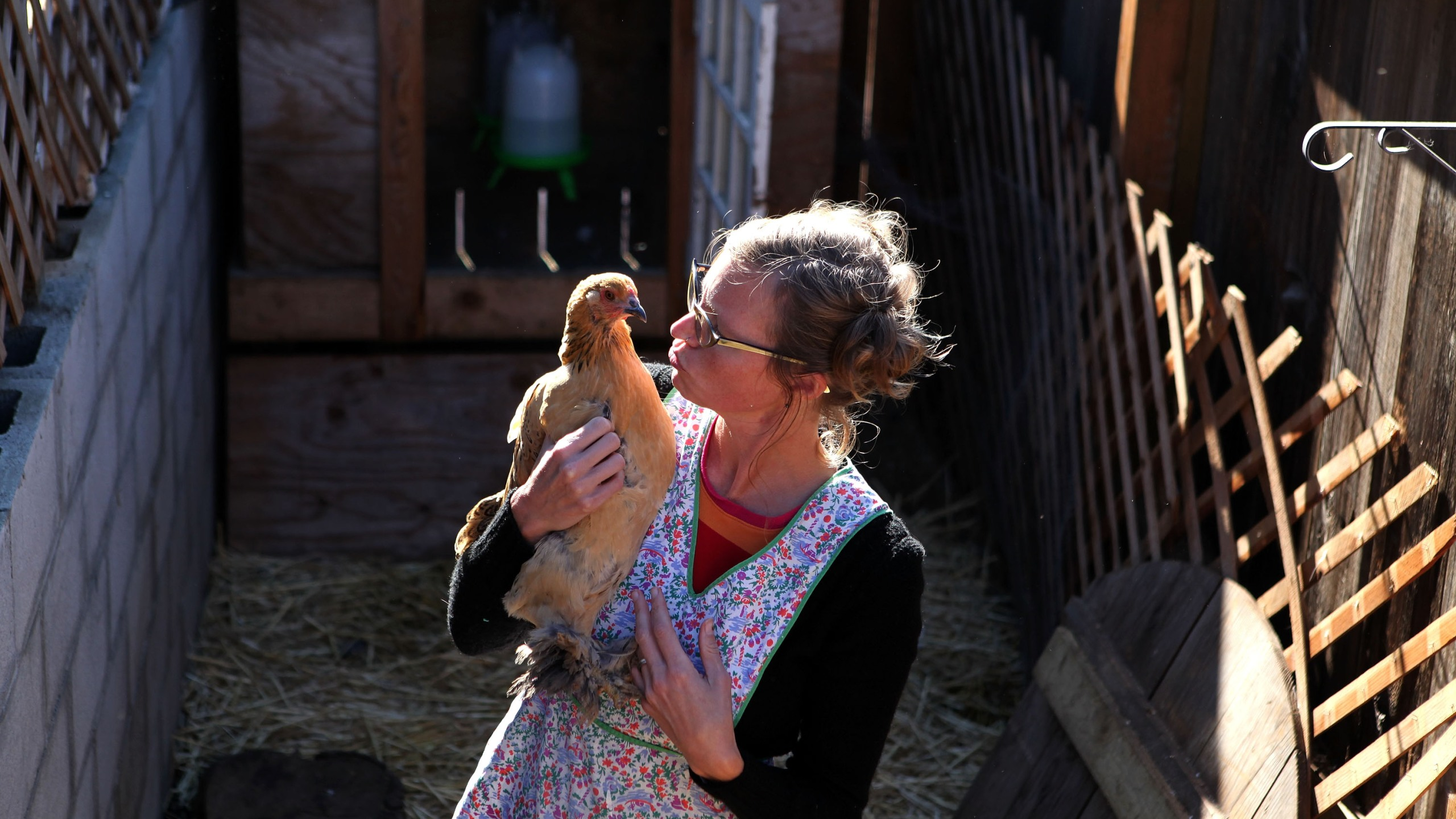 "Heidi Kooy holds one of her chickens as she walks through her yard which she calls the ""Itty Bitty Farm in the City"" November 16, 2009 in San Francisco, California. (Justin Sullivan/Getty Images)"