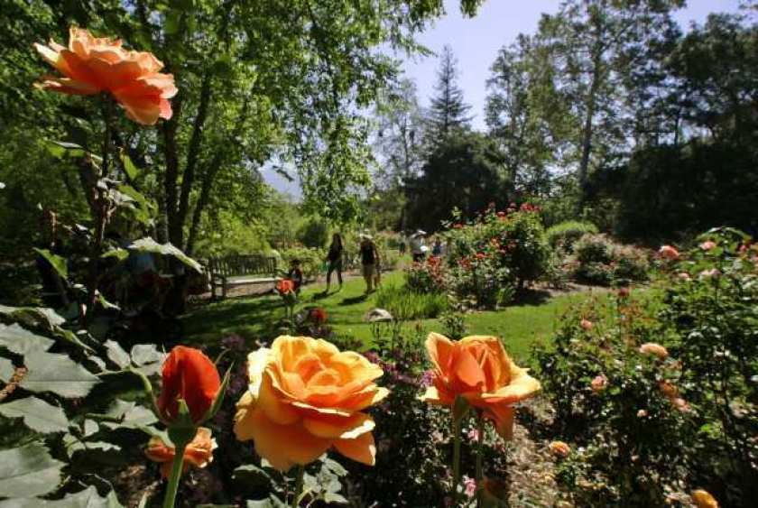 Descanso Gardens is shown in an undated file photo. (Los Angeles Times)