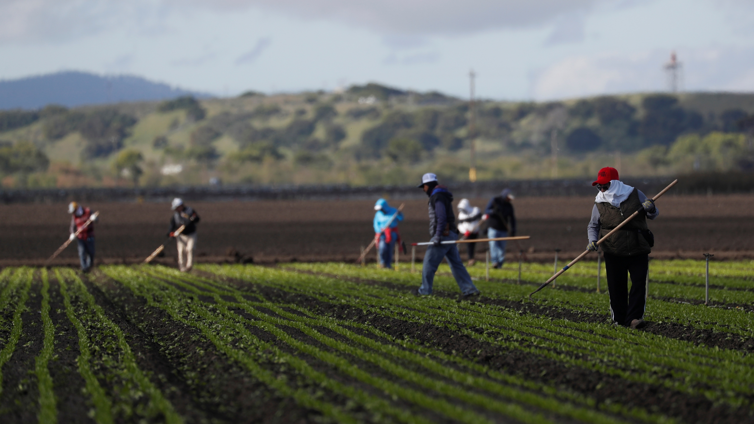 Migrant workers clean fields amid an outbreak of the coronavirus disease (COVID-19), in the Salinas Valley near Salinas, California, U.S., March 30, 2020. (REUTERS/Shannon Stapleton)