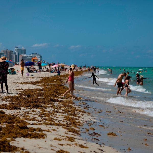 People gather on the beach in Miami Beach, Florida on June 16, 2020. (EVA MARIE UZCATEGUI/AFP via Getty Images)