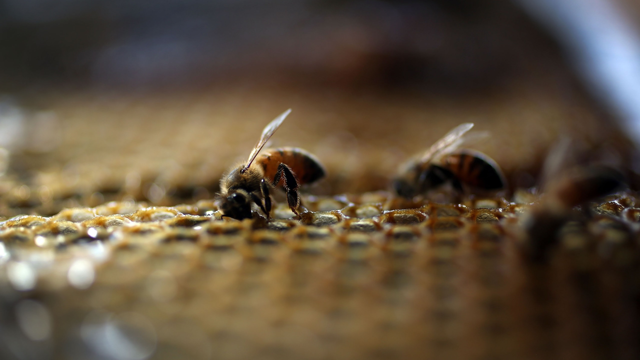 Honeybees are seen at the J & P Apiary and Gentzel's Bees, Honey and Pollination Company on May 19, 2015 in Homestead, Florida. (Joe Raedle/Getty Images)