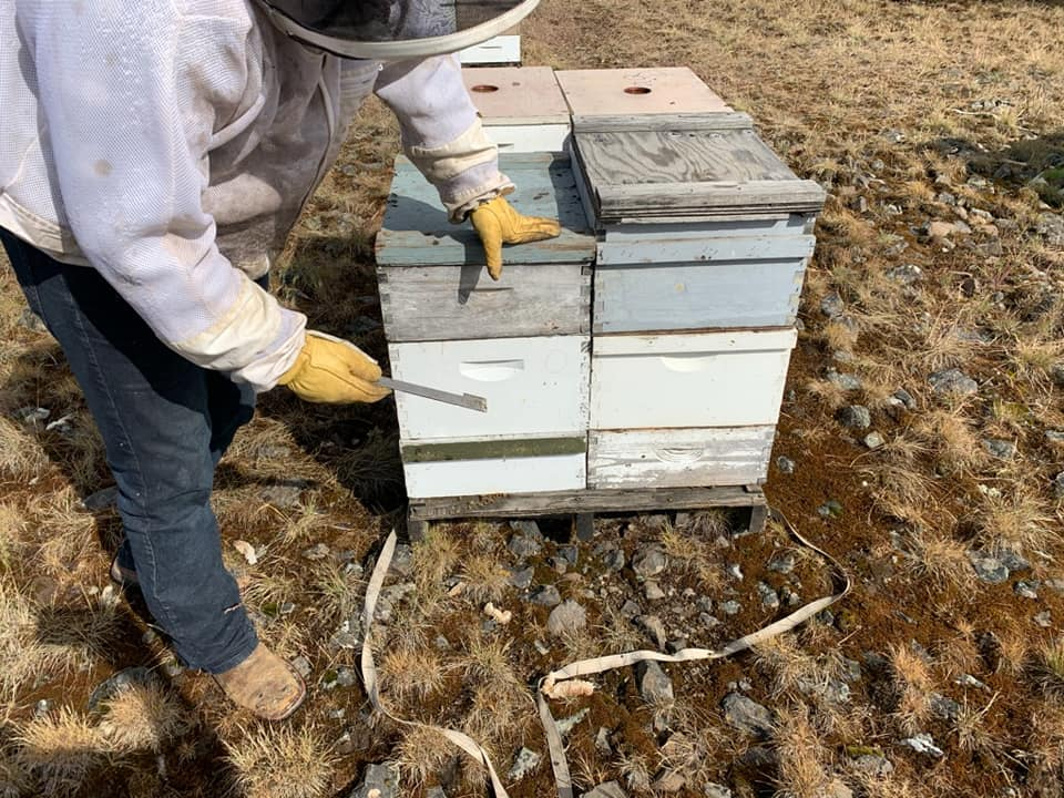 In a Facebook post announcing the arrest of Perry David Bayes, the Lincoln County Sheriff's Office in Washington state released this image showing beehives in boxes on June 15, 2020.