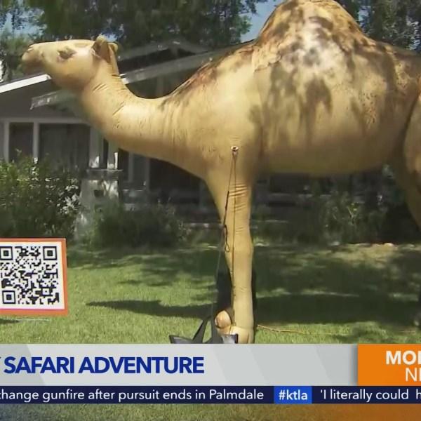 Your City Safari Adventure in Monrovia
