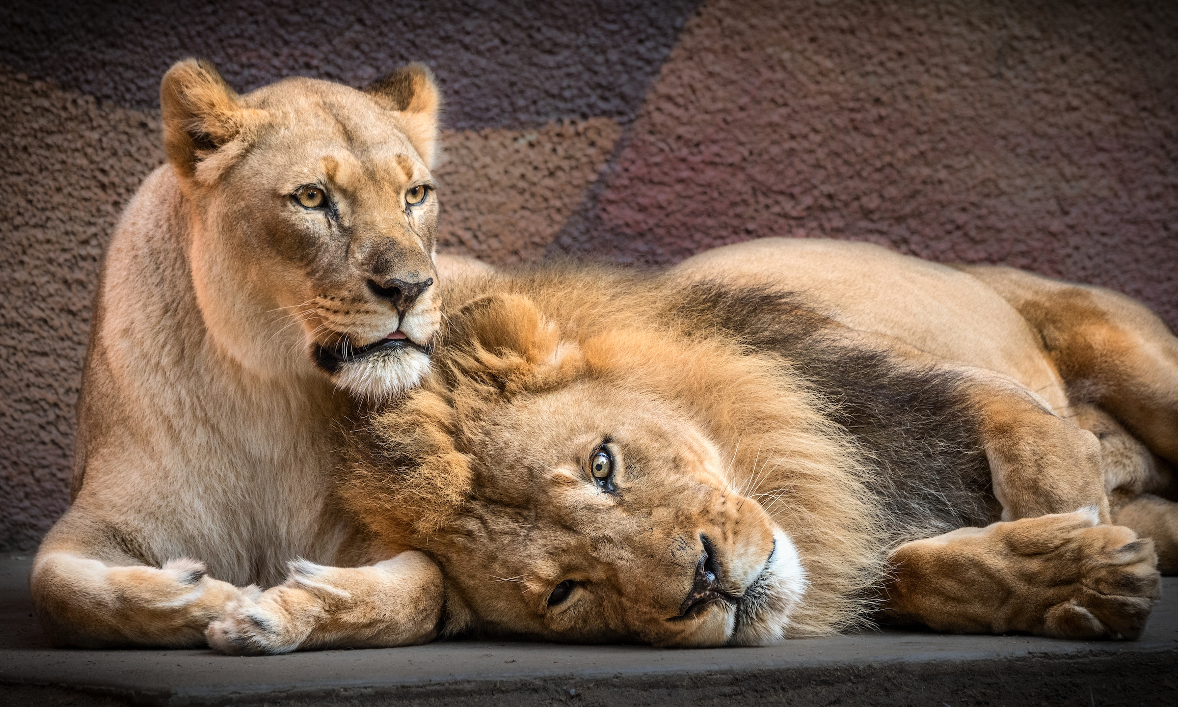 Hubert and Kalisa are seen in a photo posted by LA Zoo on July 30, 2020.