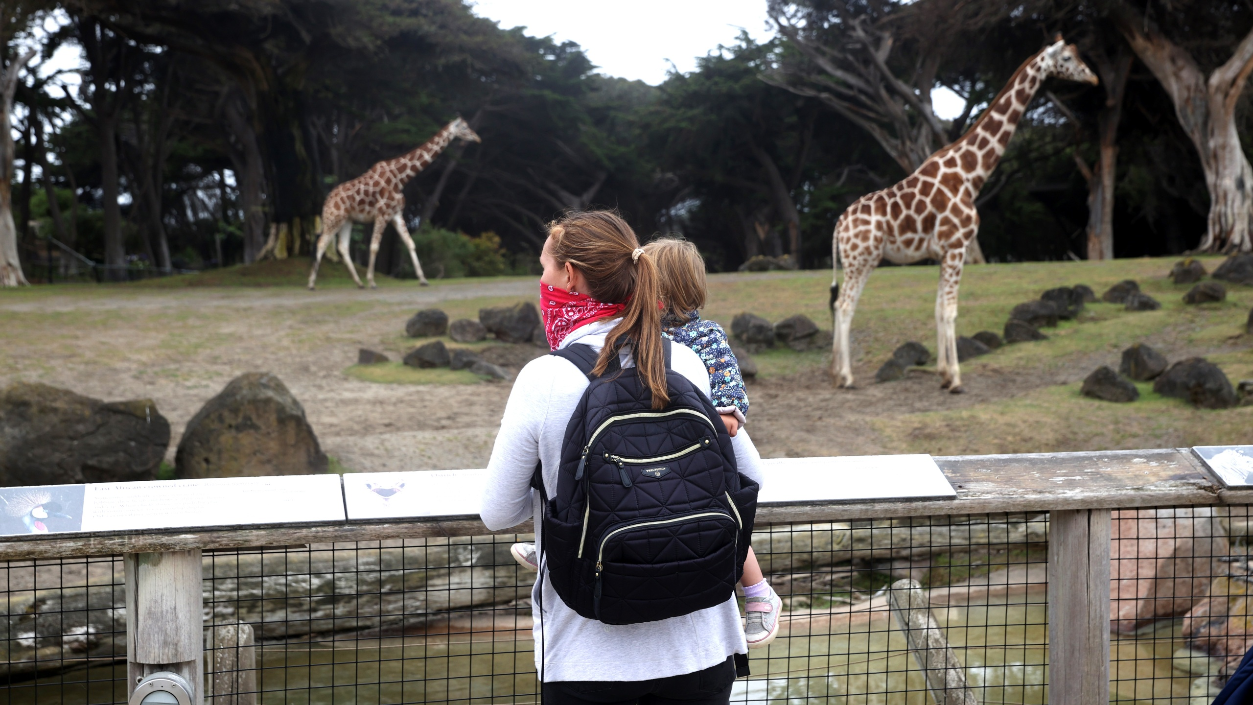 Visitors look at the giraffe exhibit at the San Francisco Zoo on July 13, 2020. (Justin Sullivan/Getty Images)