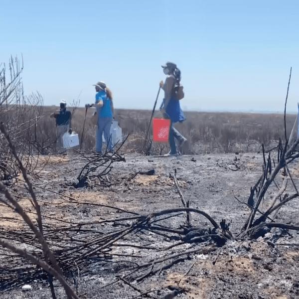 Volunteers scour Bolsa Chica wetlands for injured wildlife after brush fire on July 28, 2020. (KTLA)