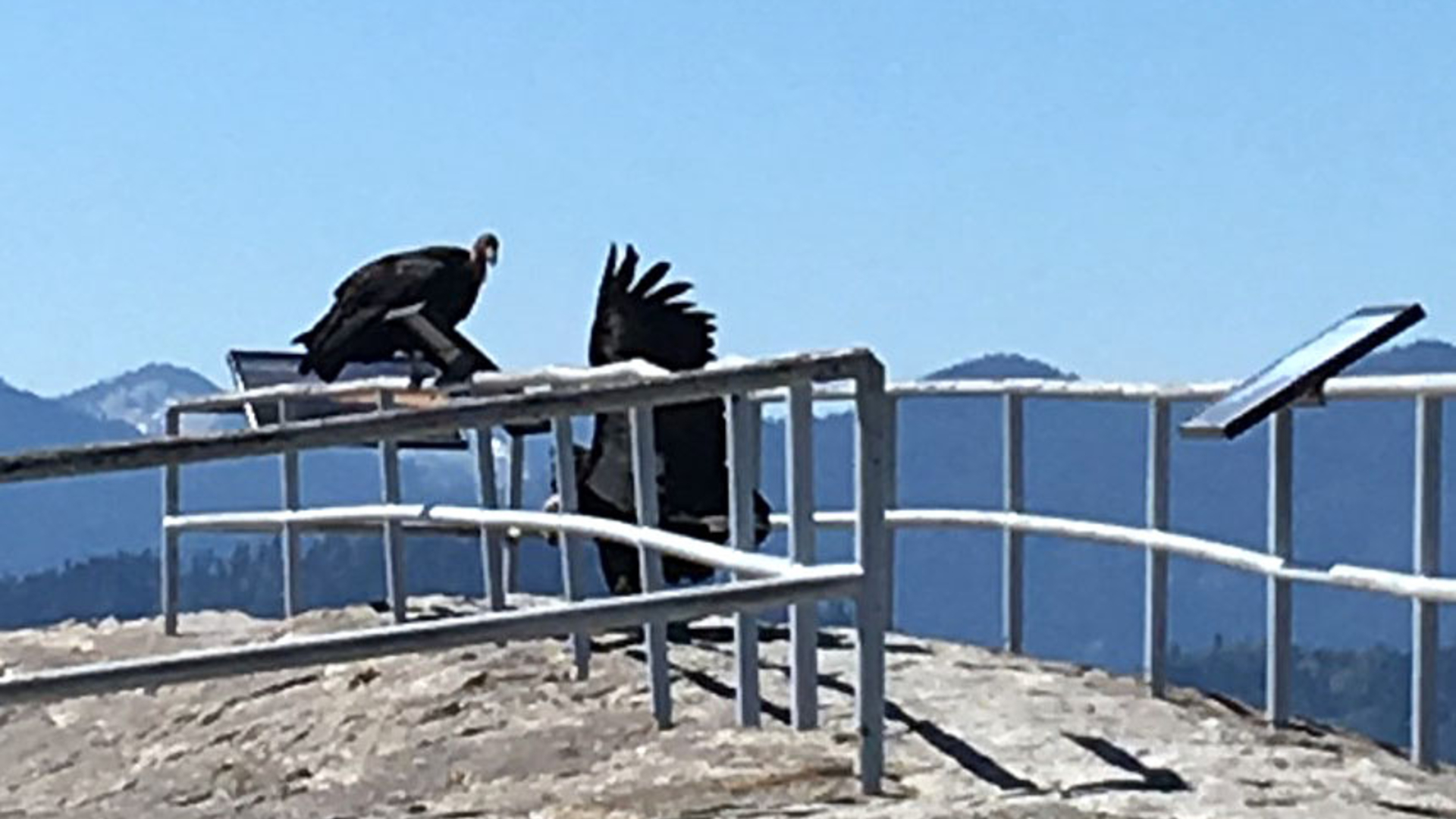 A pair of California condors are seen atop Moro Rock in Sequoia National Park in May 2020. (Wilson Garver / National Park Service)