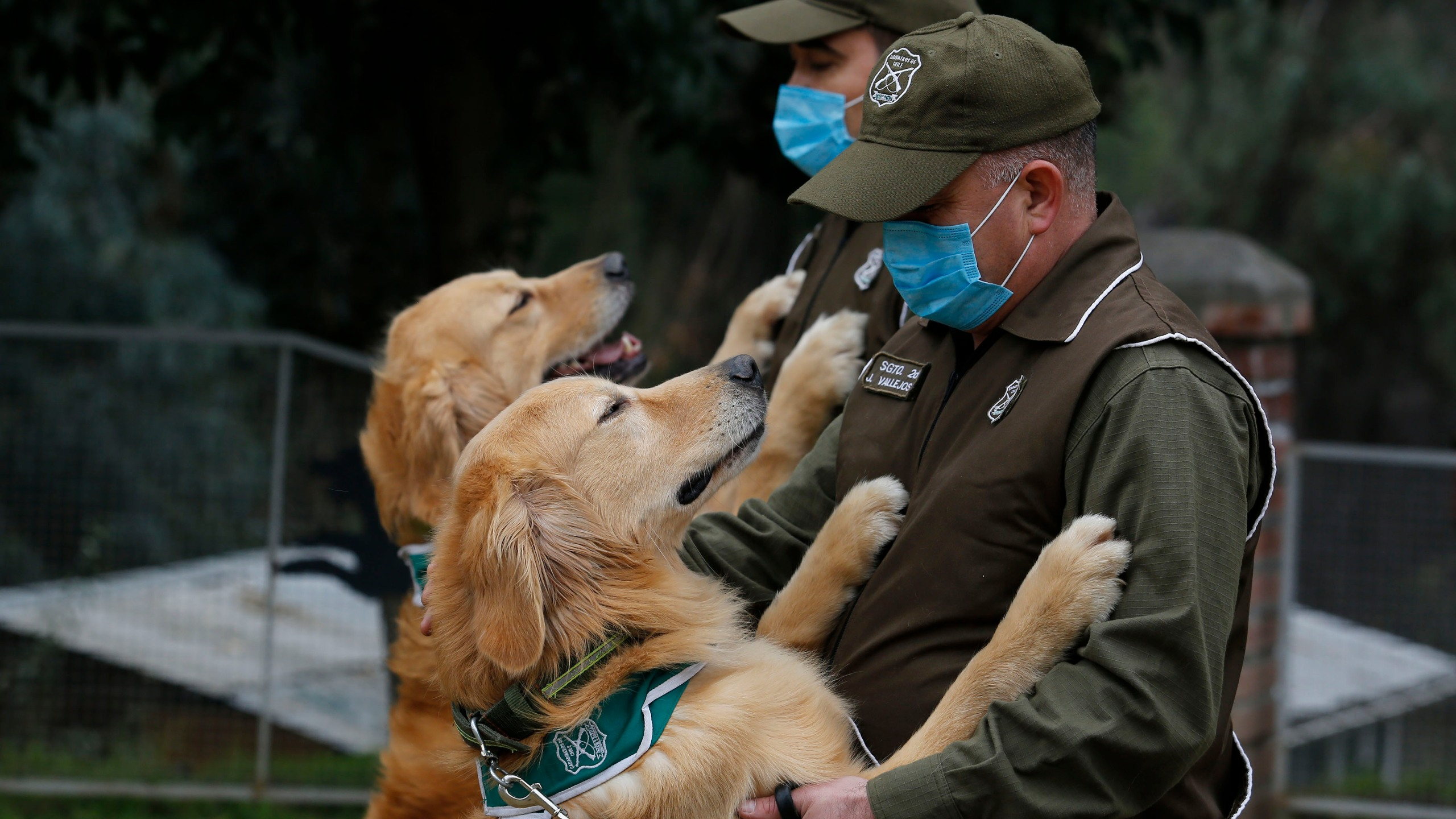 Chilean police officers and trainers work with the dogs called Keylin and Clifford at Carabineros de Chile Dog Training School in the Parque Metropolitano on July 17, 2020 in Santiago, Chile. (Marcelo Hernandez/Getty Images)
