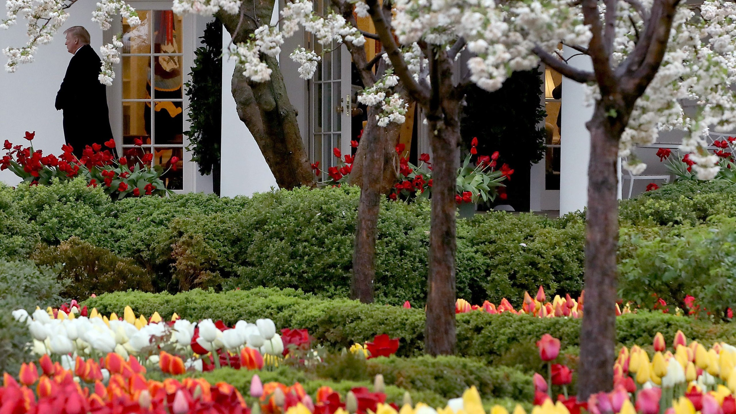 Flowers are in bloom in the Rose Garden as President Donald Trump walks out of the Oval Office toward Marine One while departing from the White House, on April 16, 2018 in Washington, DC. (Mark Wilson/Getty Images)