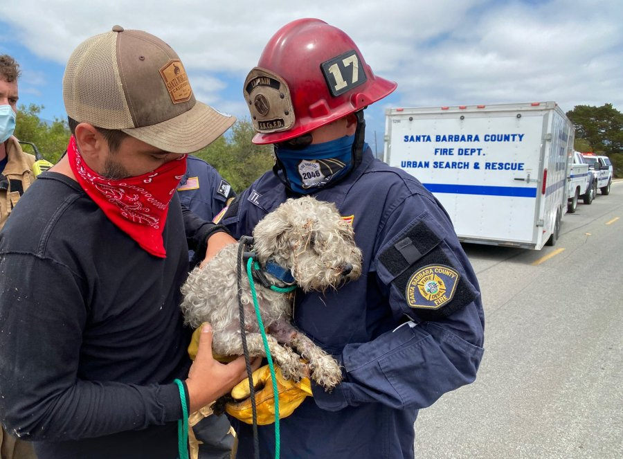 The Santa Barbara County Fire Department posted this photo of Sophie and firefighters on Instagram on July 16, 2020.