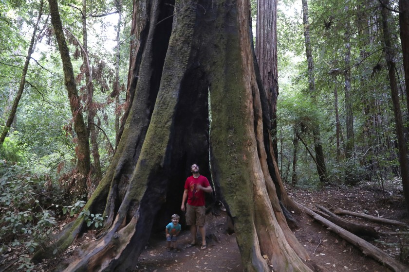 Andrew Walsh of Ben Lomond, Calif., explores a hollow tree with son Philip, 2, in Big Basin Redwoods State Park in September 2019. (Brian van der Brug / Los Angeles Times)