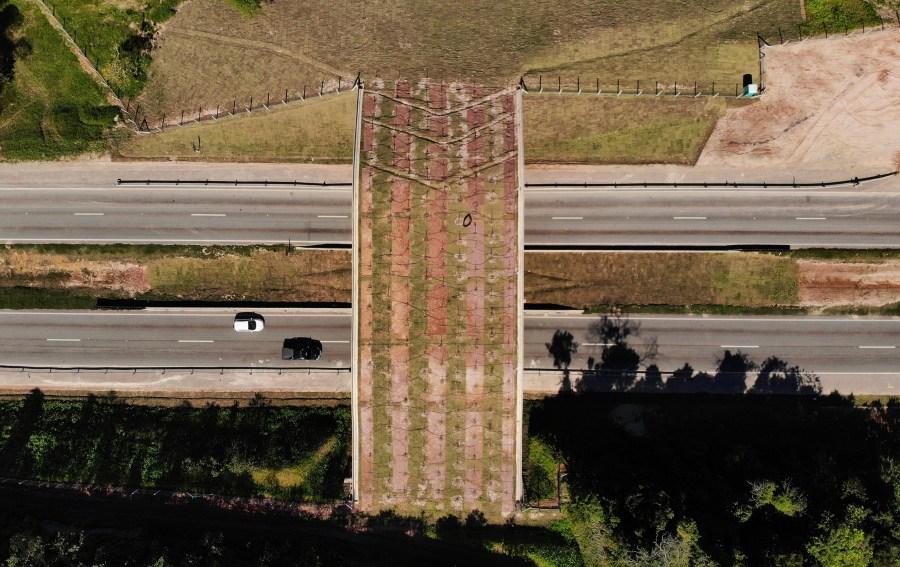 An eco-corridor for the endangered Golden Lion Tamarin crosses over an interstate highway in Silva Jardim, Rio de Janeiro, Brazil on Aug. 6, 2020. (AP Photo/Mario Lobao)