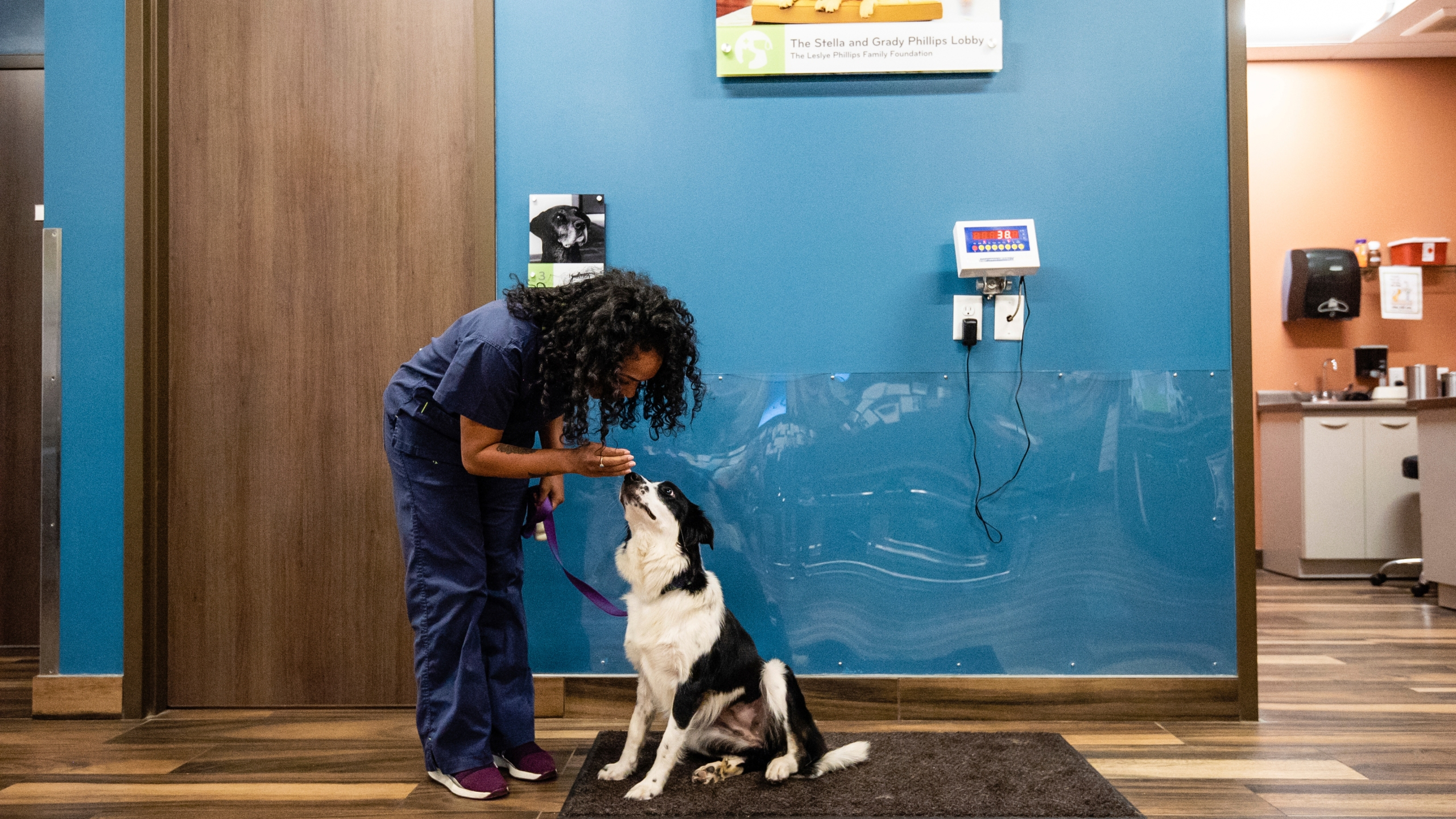 This undated photo shows a dog being weighed at Mission Animal Hospital in Eden Prairie, Minn., which provides subsidized care to low income pet owners. (Kirsten Eitreim/Mission Animal Hospital via AP)
