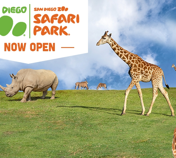 You could win tickets to the San Diego Zoo or the Safari Park!