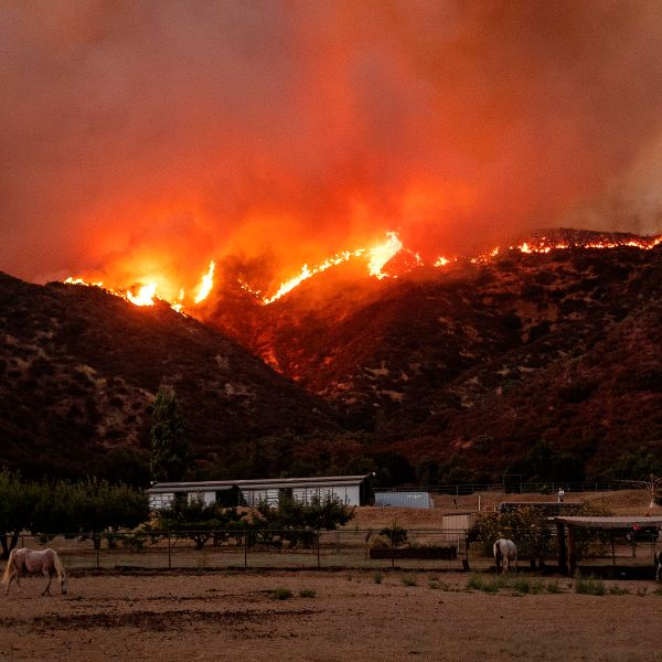 Horses graze as flames from the Apple Fire skirt a ridge in a residential area of Banning on Aug. 1, 2020. (Josh Edelson / AFP / Getty Images)