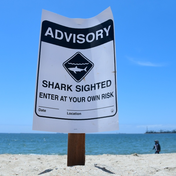 Warning signs for shark sightings remain in Long Beach on May 16, 2017, where Great White sharks and their pups have been sighted regularly off southern California beaches. (FREDERIC J. BROWN/AFP via Getty Images)