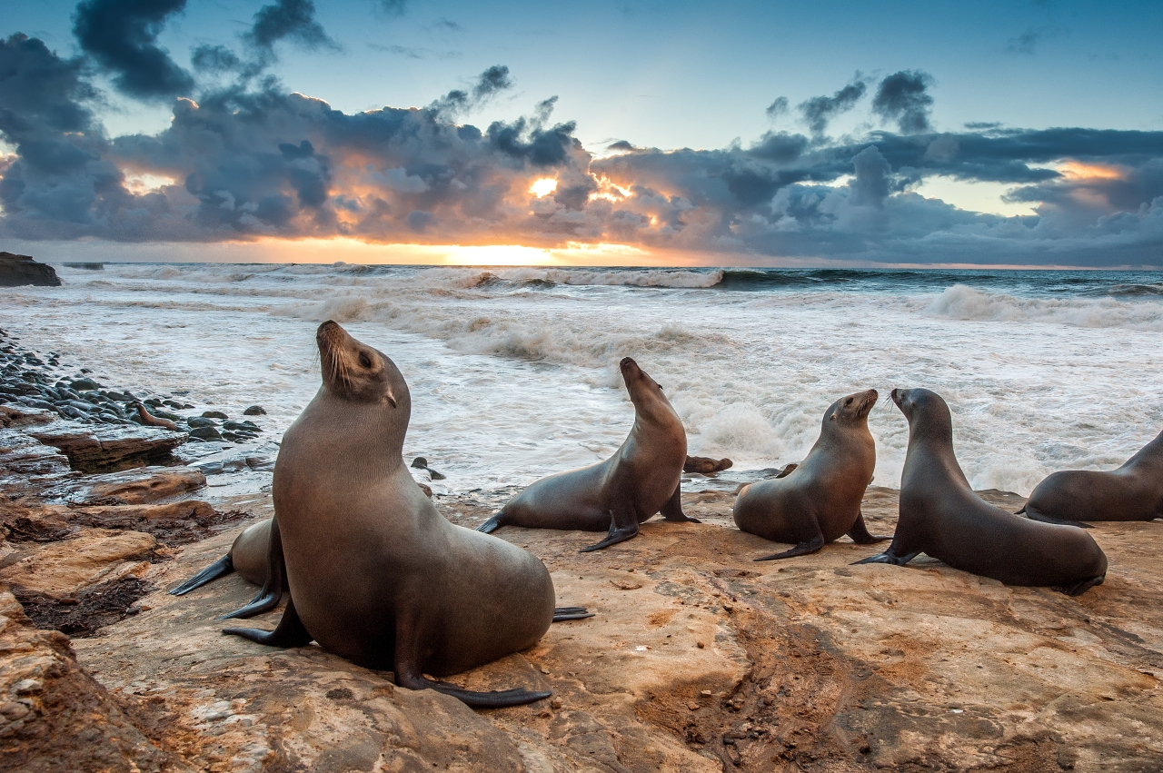 Experts warn against getting close to take photos of sea lions and their pups at La Jolla