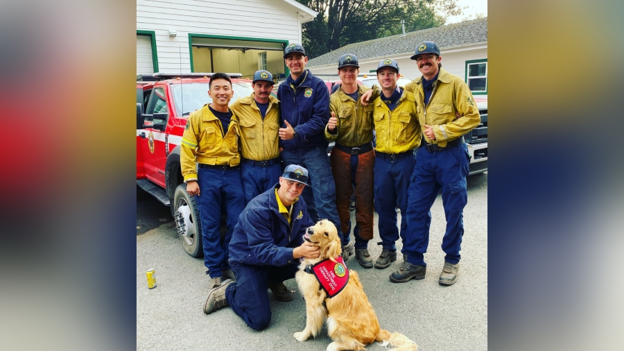 Kerith, a pet therapy dog, poses with firefighters in Marin County in 2020. (Heidi Carmen via CNN)