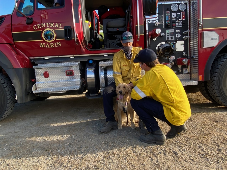 Kerith goes from firetruck to firetruck wagging her tail as Marin County firefighters watch in 2020.