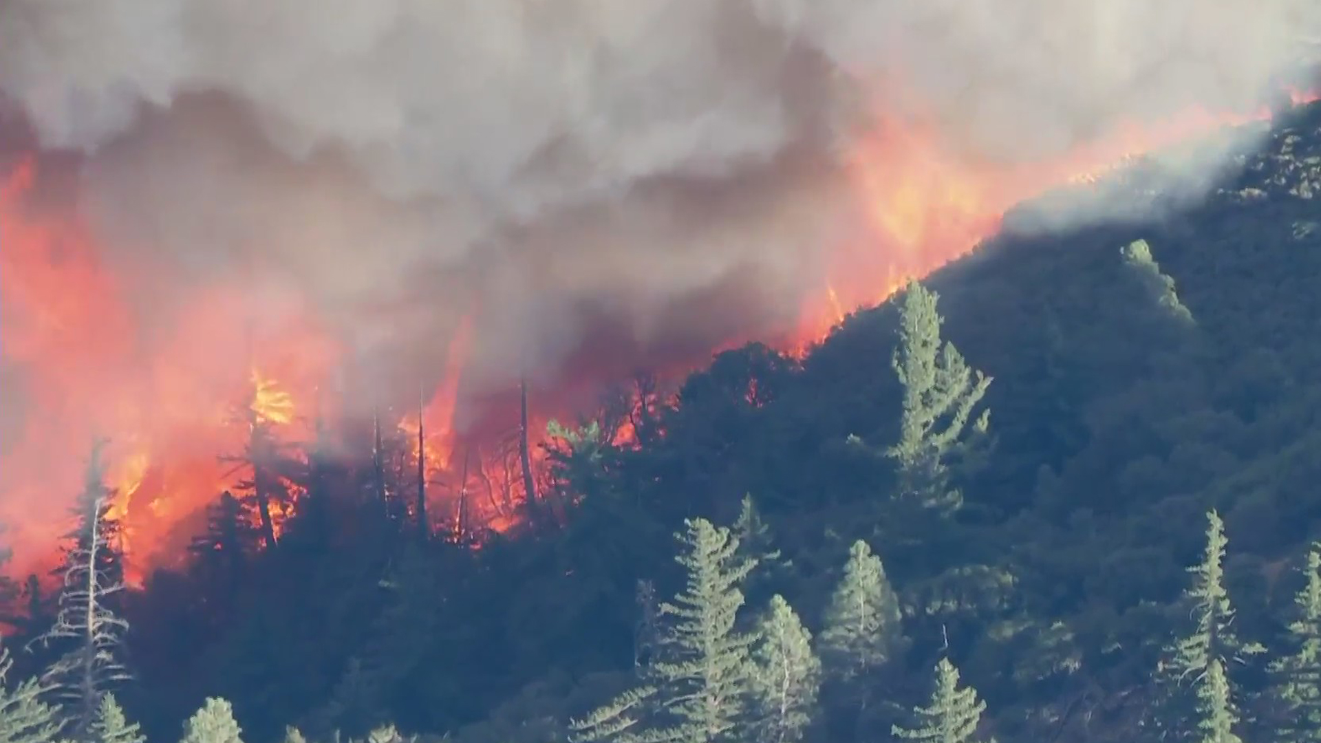 Trees burns during the Lake Fire in the Lake Hughes area of the Angeles National Forest on Aug. 12, 2020. (KTLA)