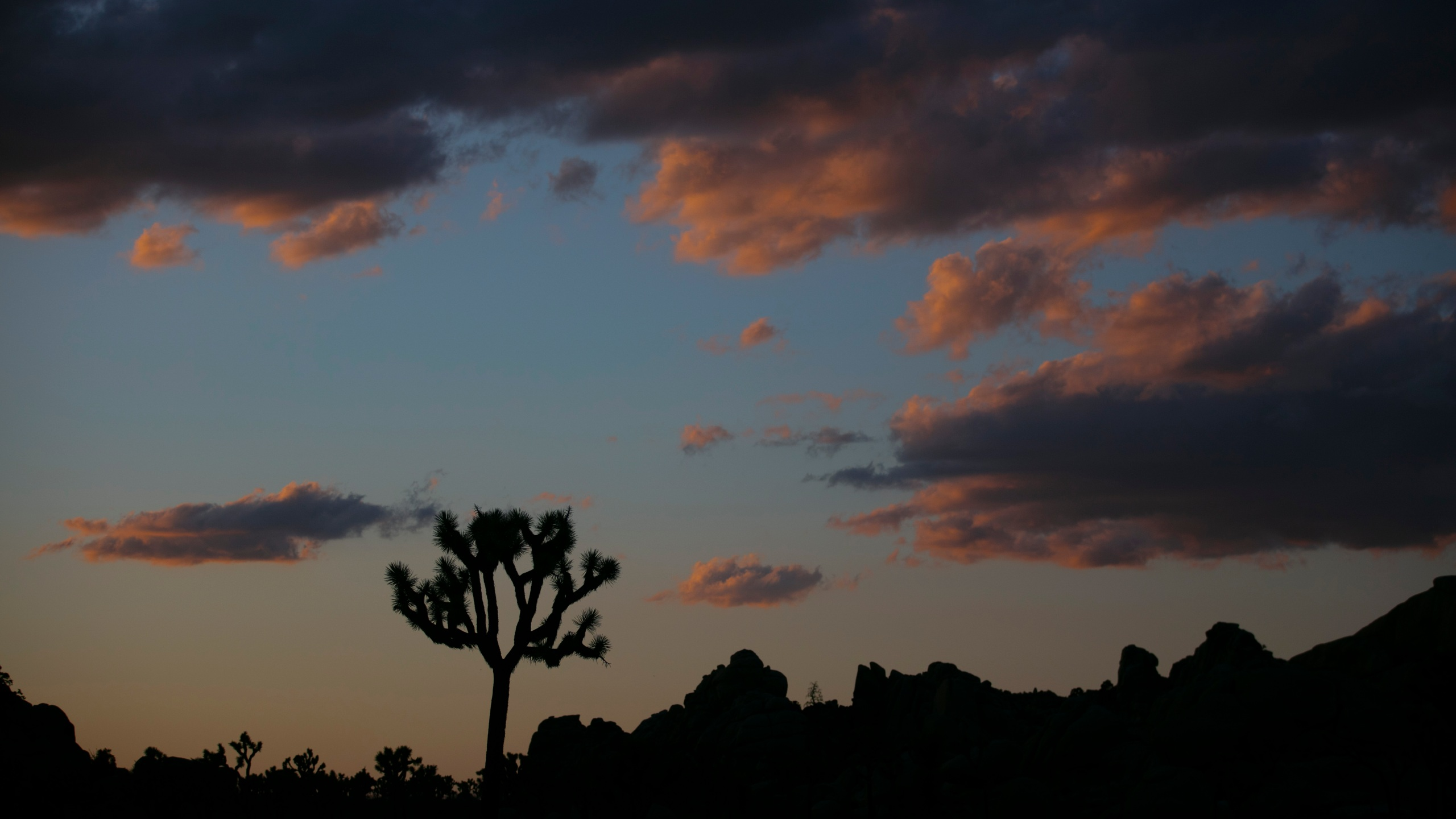 In this May 19, 2020 file photo a Joshua tree is silhouetted against the sky at Joshua Tree National Park in California. (Jae C. Hong/Associated Press)