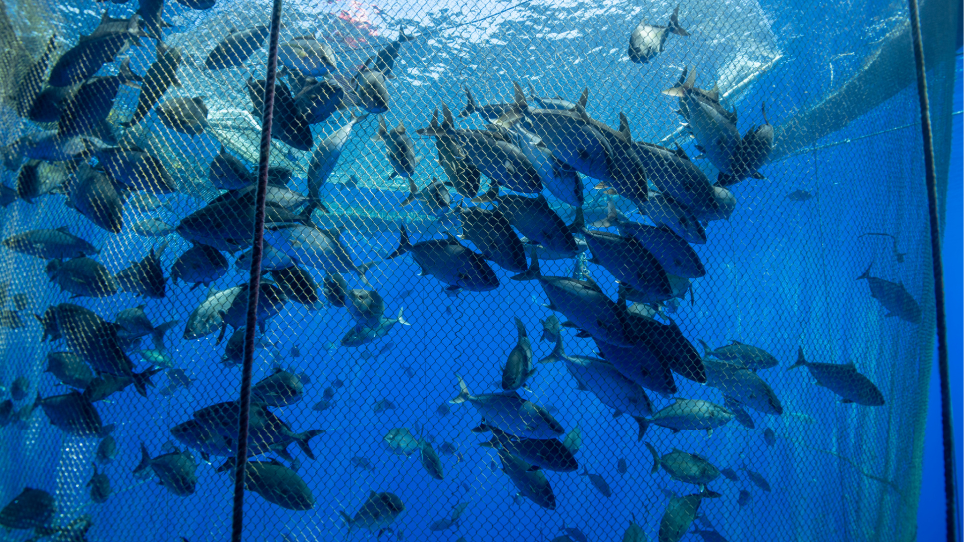 A fish farm is seen in an undated file photo. (Getty Images)