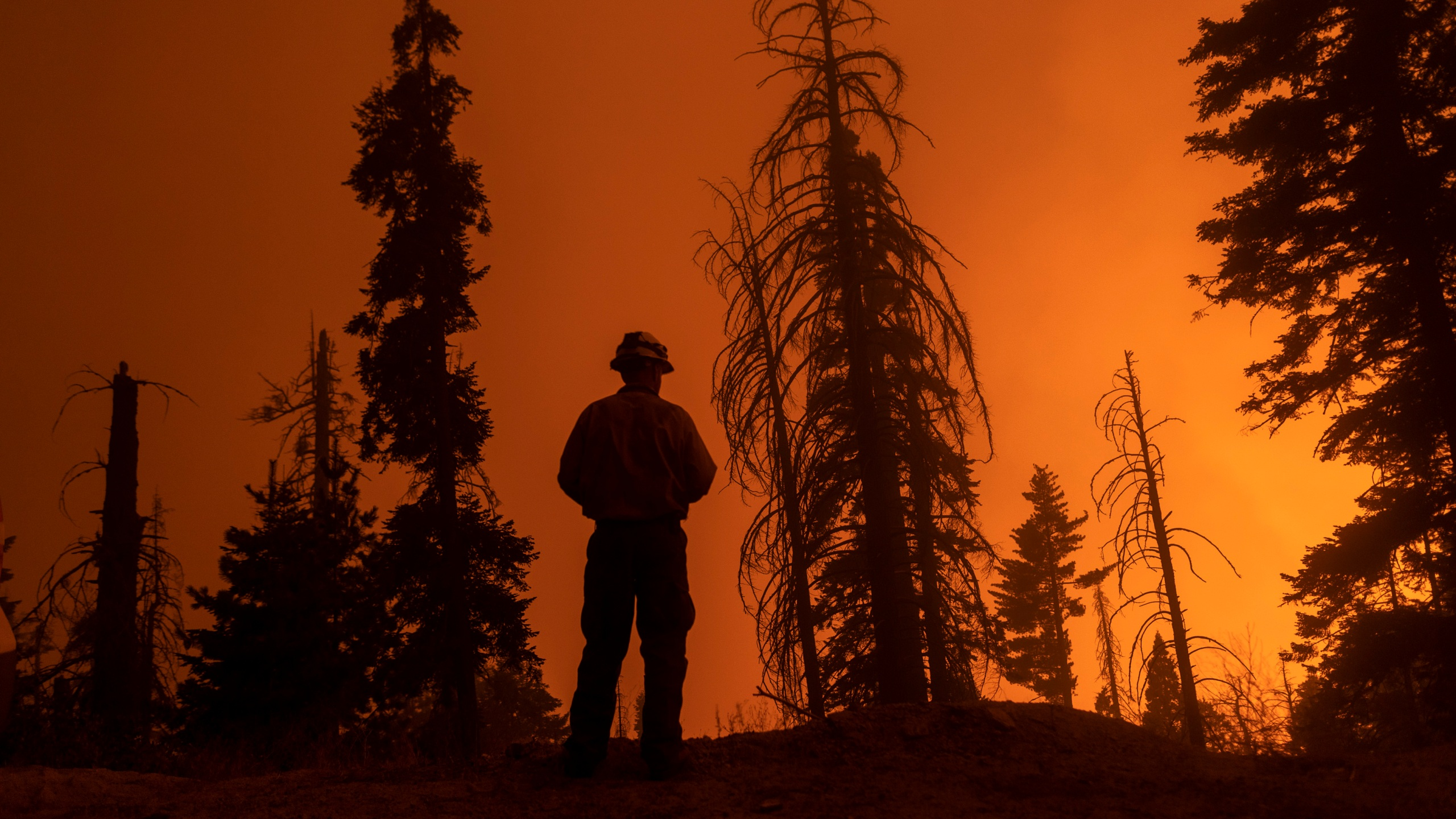 A firefighter keeps watch as flames advance along the Western Divide Highway during the SQF Complex Fire near Camp Nelson on Sept. 14, 2020. (David McNew / Getty Images)