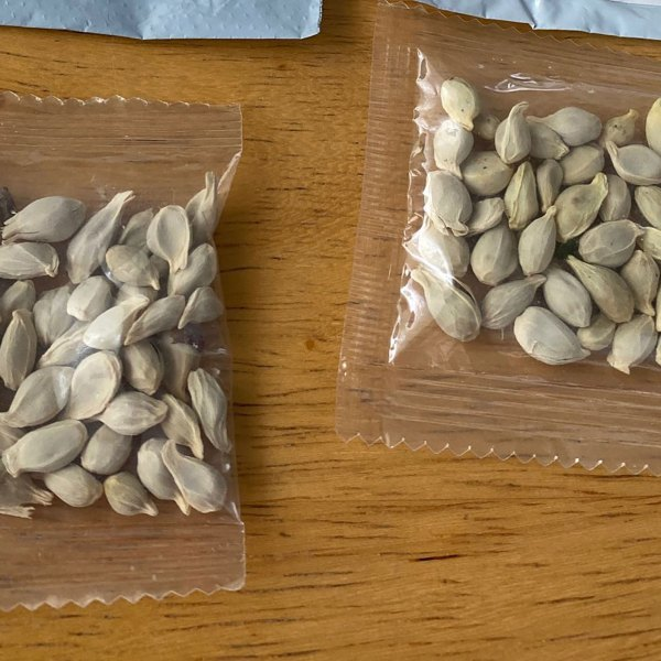 In this photo posted on Facebook by the Washington State Department of Agriculture, packages of unidentified seeds sent to the U.S. from China are seen.